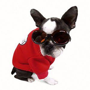 Очки для собак купить спб