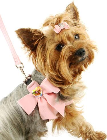 Купить шлейку для собак