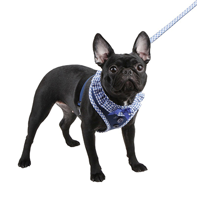 Шлейка для собак в СПб