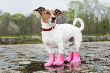 Резиновые сапоги для собак купить в СПб