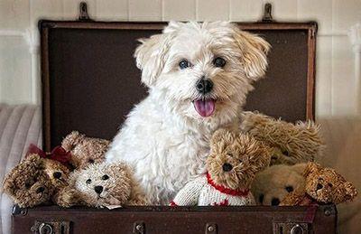 Мягкие игрушки для собак в ассортименте