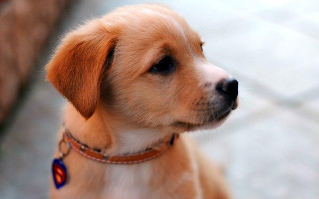 Большой выбор стильных кожаных ошейников для собаки
