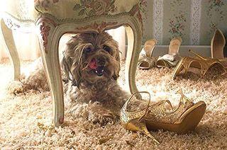 Воспитание собаки начинается с первого дня его пребывания в доме