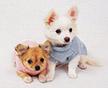 Одежда для собак маленьких пород спасет от жары и холода, дождя и грязи