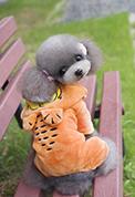 Купить смешной костюм для собаки для фотосессии с любимым питомцем