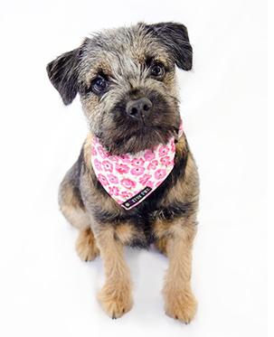 Бандана для собак — любимый аксессуар для вашего питомца