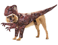 Смешные костюмы для собак — всем на радость!