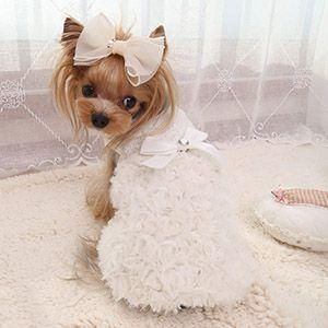 Праздничный костюм-платье для собак