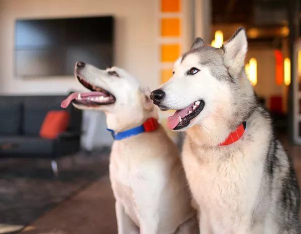 Купить заколки для собак спб с доставкой
