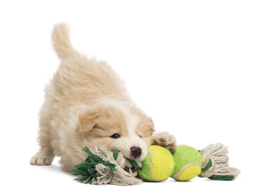 Мягкие игрушки для маленьких собак