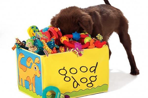 Игрушки для развития собак маленьких пород