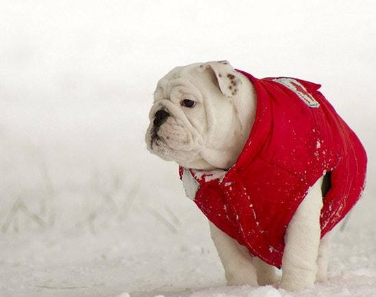 Одежду для собак купить в СПб f8b84e8987c