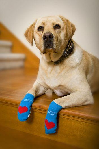 Носки для собак купить