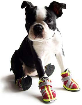 Обувь для собак купить в СПб