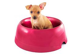 Миски для собак купить недорого в СПб