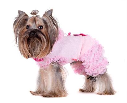 Вязаные комбинезоны для собак
