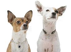 Ошейники для собак