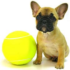 Резиновые игрушки для собак
