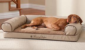 Уют и комфорт: как выбрать лежанку для собаки